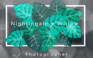 Nightingale + Willow